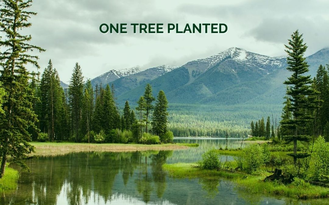 Effective Altruism - One Tree Planted